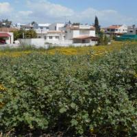 Plot in Sotiros 715 m2 - Larnaca